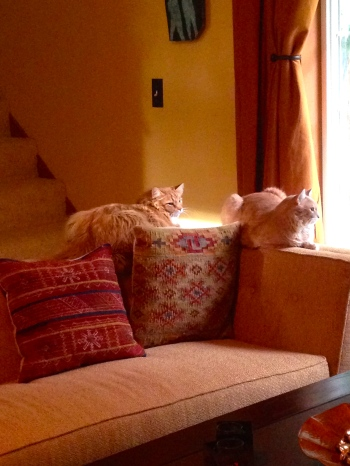 Firecat & Honey Boy keep an eye on the window.